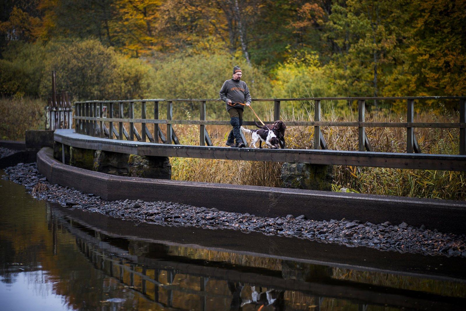 Det blir många timmar både i skogen och på vägarna för Roger och hans hundar. Här på bilden är Trolle och Birka.
